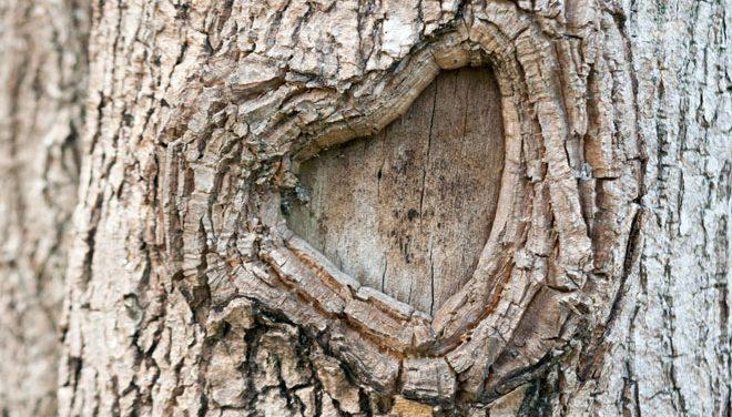 cicatriz en árbol